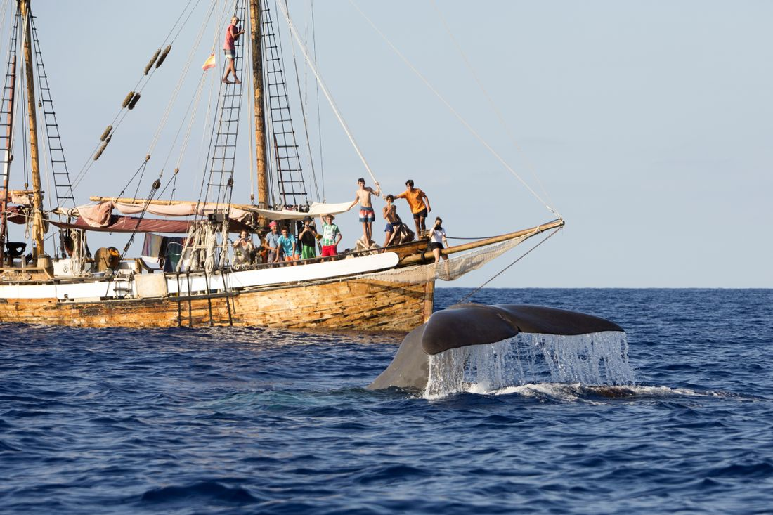 Students spot sperm whales seven times in one day!
