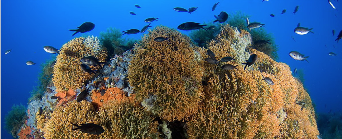 A Network of Marine Protected Areas